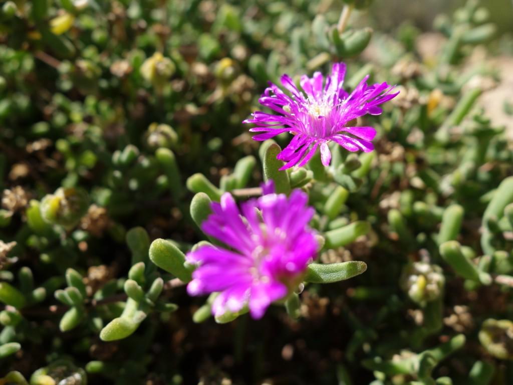 Karoo Botanical Nat Garden (5)