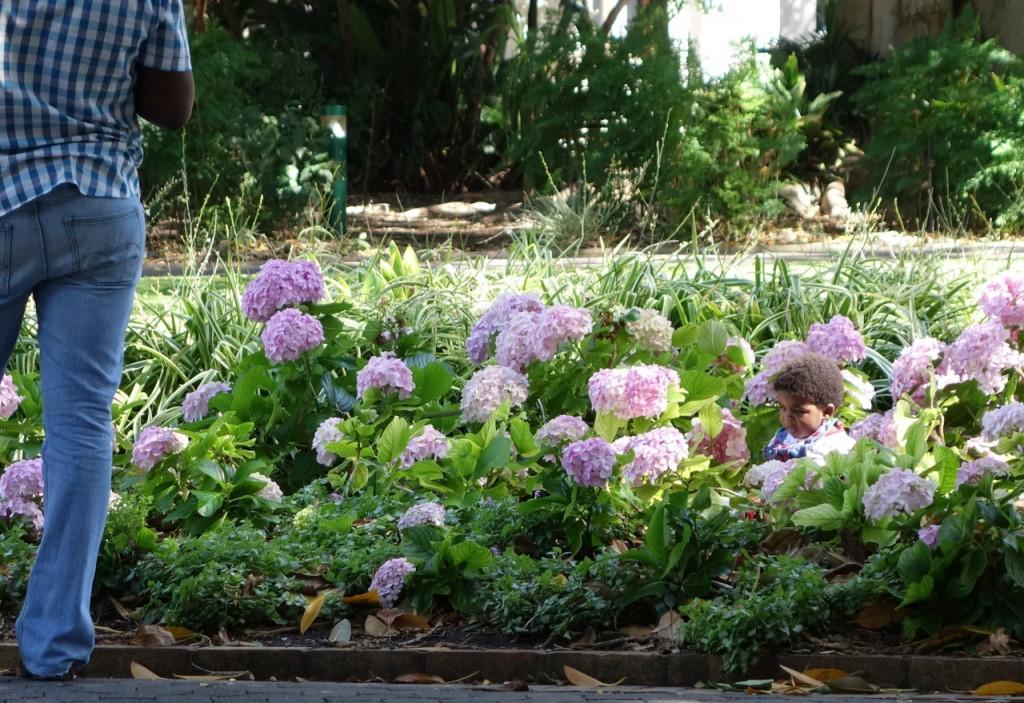 Seltsame Blüten, die da treiben